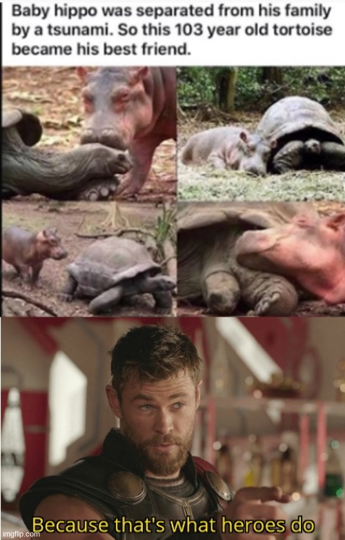How wholwsome | image tagged in that s what heroes do,wholesome,hippo,turtle | made w/ Imgflip meme maker