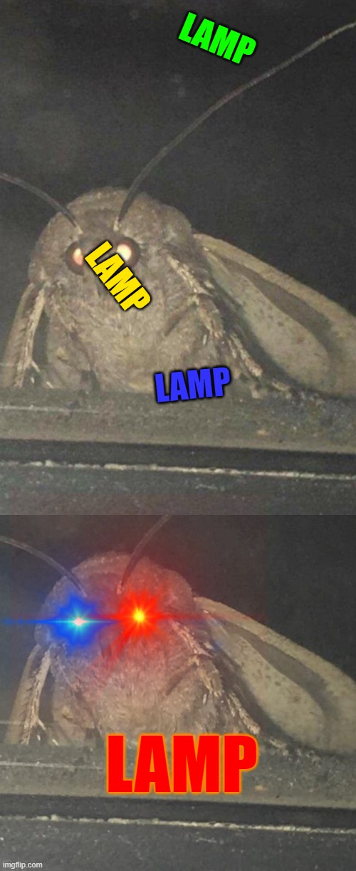 i will what the frickkkkkkkkk bruh |  LAMP; LAMP; LAMP; LAMP | image tagged in moth,moth lamp | made w/ Imgflip meme maker