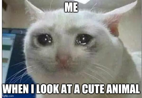 crying cat |  ME; WHEN I LOOK AT A CUTE ANIMAL | image tagged in crying cat | made w/ Imgflip meme maker