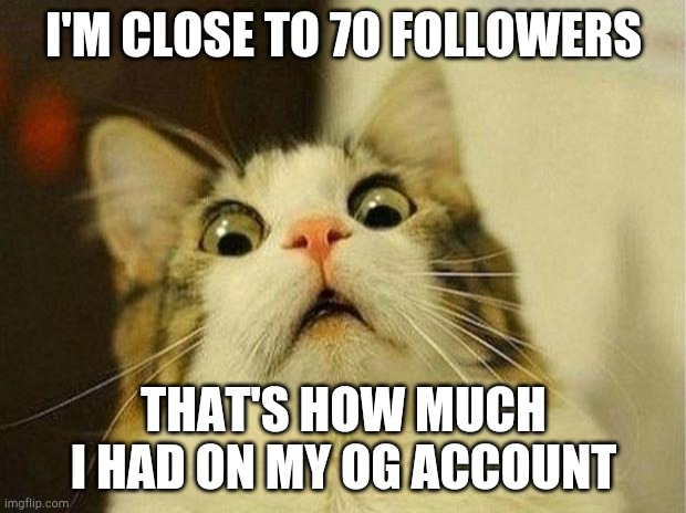 Thanks so much for all the support and love, it means a lot to me. Balancing my YT and IMGflip content has been rough |  I'M CLOSE TO 70 FOLLOWERS; THAT'S HOW MUCH I HAD ON MY OG ACCOUNT | image tagged in memes,scared cat | made w/ Imgflip meme maker