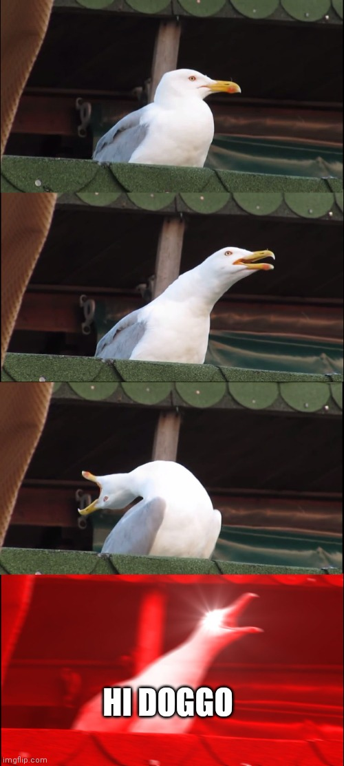 HI DOGGO | image tagged in memes,inhaling seagull | made w/ Imgflip meme maker