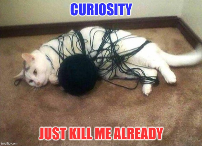 CURIOSITY |  CURIOSITY; JUST KILL ME ALREADY | image tagged in funny cats,cats,curious,curiosity,curious question cat,yarn | made w/ Imgflip meme maker