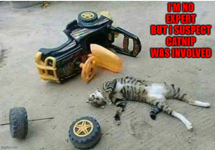 Just say no... |  I'M NO EXPERT BUT I SUSPECT CATNIP WAS INVOLVED | image tagged in cats,catnip,memes,animals | made w/ Imgflip meme maker