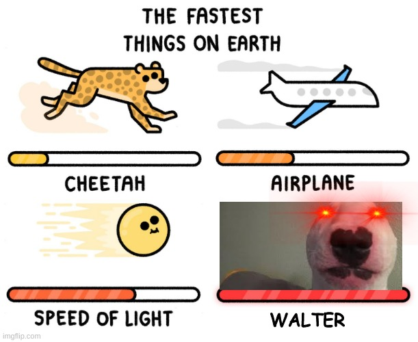 Fastest thing on earth |  WALTER | image tagged in fastest thing on earth | made w/ Imgflip meme maker