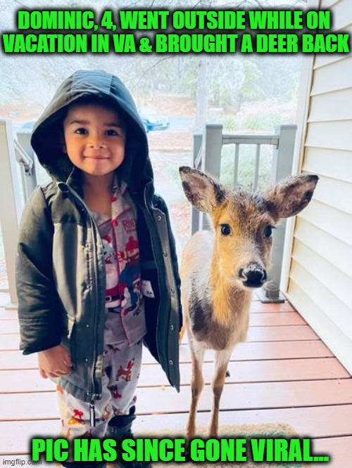 Feel Good Story of the Day |  DOMINIC, 4, WENT OUTSIDE WHILE ON   VACATION IN VA & BROUGHT A DEER BACK; PIC HAS SINCE GONE VIRAL... | image tagged in fun,friendship,best friends,deer,ahhhhh,little boy | made w/ Imgflip meme maker