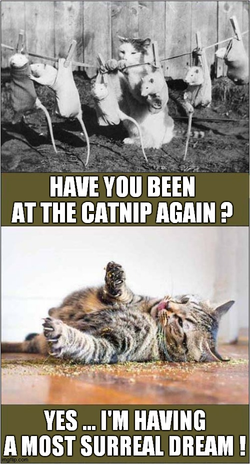 Catnip Dream |  HAVE YOU BEEN AT THE CATNIP AGAIN ? YES ... I'M HAVING A MOST SURREAL DREAM ! | image tagged in cats,catnip,surreal,dream | made w/ Imgflip meme maker