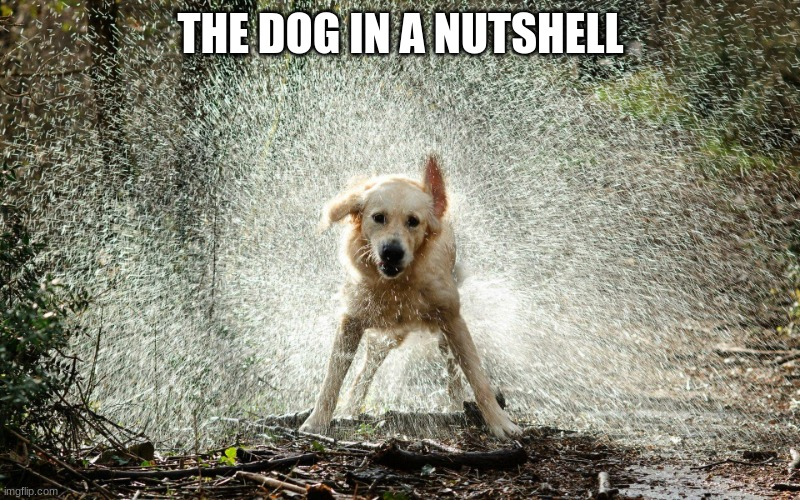 wet dog | THE DOG IN A NUTSHELL | image tagged in wet dog | made w/ Imgflip meme maker