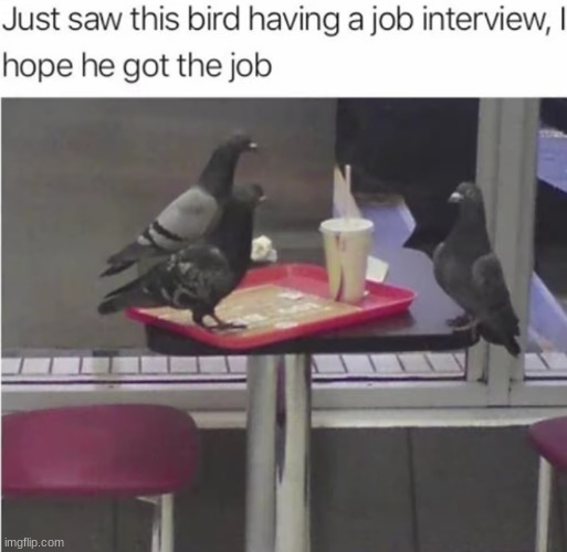I too hope the bird gets the job | image tagged in job interview,birds,funny | made w/ Imgflip meme maker