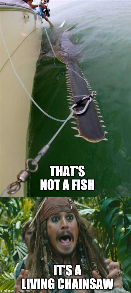 IT'S GONNA CUT A HOLE IN THE SHIP |  THAT'S NOT A FISH; IT'S A LIVING CHAINSAW | image tagged in fishing,pirate,jack sparrow,pirates,pirates of the caribbean | made w/ Imgflip meme maker