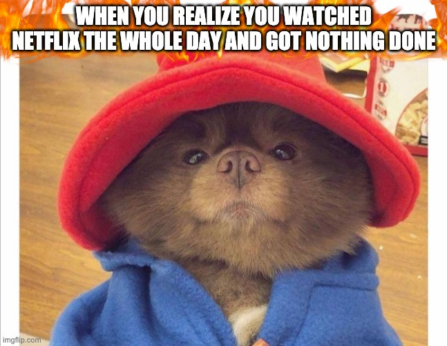 Paddington baby boo |  WHEN YOU REALIZE YOU WATCHED NETFLIX THE WHOLE DAY AND GOT NOTHING DONE | image tagged in netflix and chill,pomeranian,cute,puppy,kindness,netflix | made w/ Imgflip meme maker