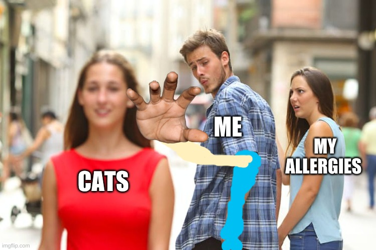 Distracted Boyfriend |  ME; MY ALLERGIES; CATS | image tagged in memes,distracted boyfriend,cats | made w/ Imgflip meme maker