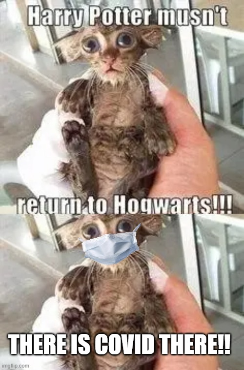 If dobby warned Harry Potter in 2020 |  THERE IS COVID THERE!! | image tagged in harry potter,harry potter meme,dobby,cough,coughing cat,covid-19 | made w/ Imgflip meme maker