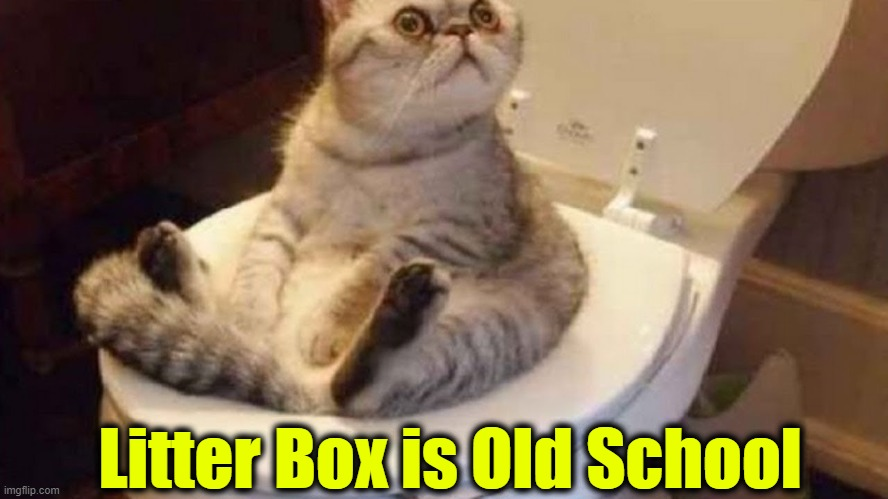 What Are You Looking At....? |  Litter Box is Old School | image tagged in funny,fun,cute cat,odd | made w/ Imgflip meme maker