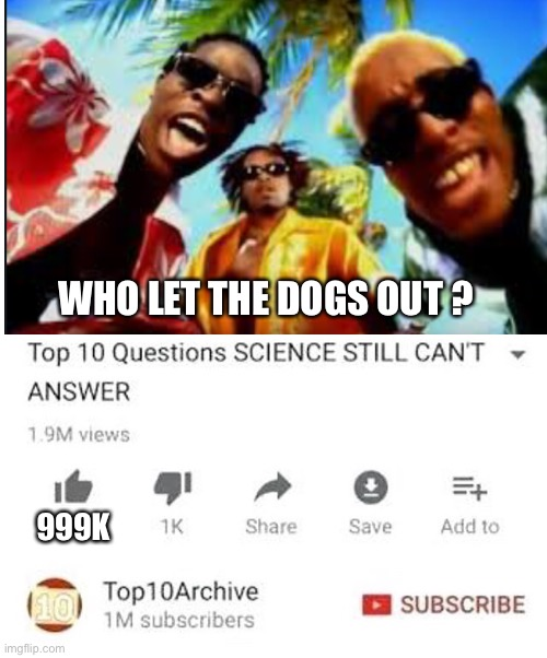 Lol |  WHO LET THE DOGS OUT ? 999K | image tagged in funny,memes,funny memes | made w/ Imgflip meme maker