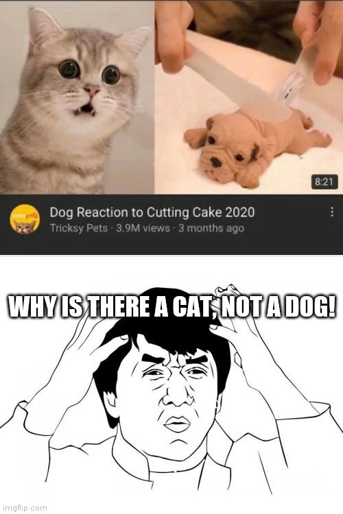 Wrong Pet Reaction, LOL! |  WHY IS THERE A CAT, NOT A DOG! | image tagged in memes,jackie chan wtf,funny,you had one job,cats,dogs | made w/ Imgflip meme maker