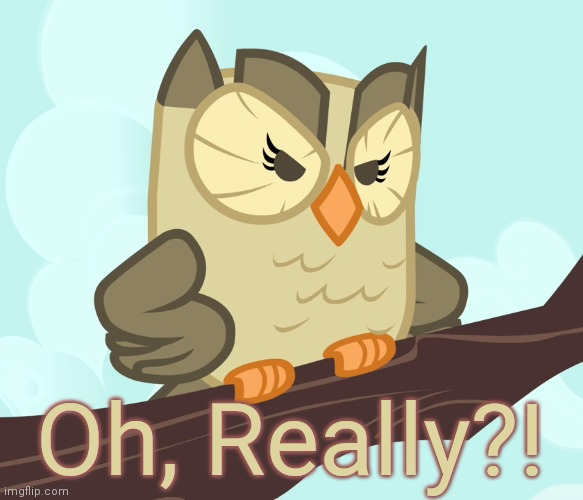 Scowled Owlowiscious (MLP) | Oh, Really?! | image tagged in scowled owlowiscious mlp | made w/ Imgflip meme maker