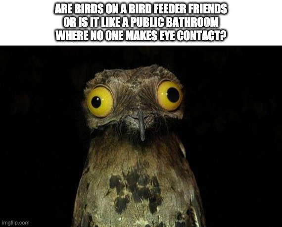 Bird feeder |  ARE BIRDS ON A BIRD FEEDER FRIENDS OR IS IT LIKE A PUBLIC BATHROOM WHERE NO ONE MAKES EYE CONTACT? | image tagged in memes,birds | made w/ Imgflip meme maker