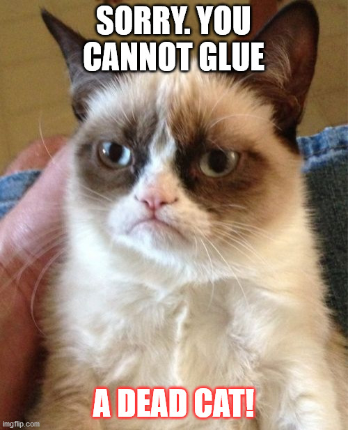 SORRY. YOU CANNOT GLUE A DEAD CAT! | image tagged in memes,grumpy cat | made w/ Imgflip meme maker