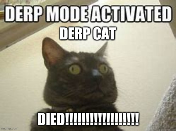derp mode activate!! |  DERP CAT; DIED!!!!!!!!!!!!!!!!!! | image tagged in derp | made w/ Imgflip meme maker