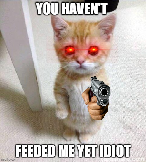 Cute Cat Meme |  YOU HAVEN'T; FEEDED ME YET IDIOT | image tagged in memes,cute cat | made w/ Imgflip meme maker