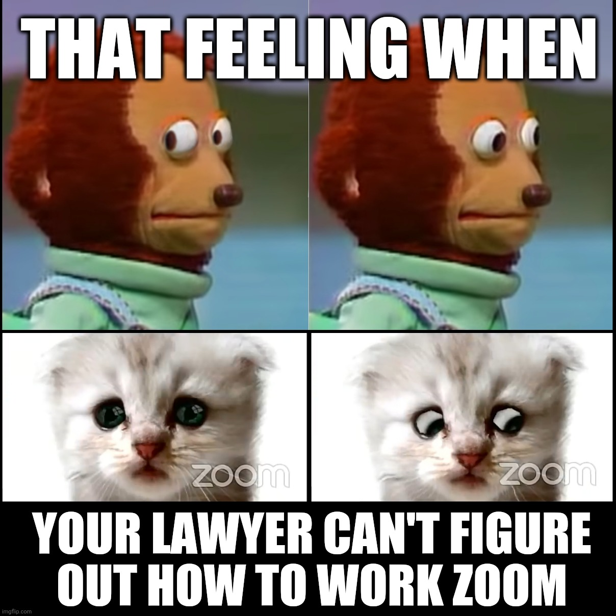 Lawyer Cat on Zoom |  THAT FEELING WHEN; YOUR LAWYER CAN'T FIGURE OUT HOW TO WORK ZOOM | image tagged in lawyer,cat,zoom | made w/ Imgflip meme maker