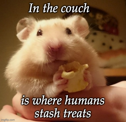Secret Hamster Wisdom |  In the couch; is where humans stash treats | image tagged in treasure,hamster,couch | made w/ Imgflip meme maker