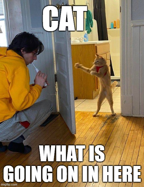 CAT; WHAT IS GOING ON IN HERE | image tagged in funny cats | made w/ Imgflip meme maker