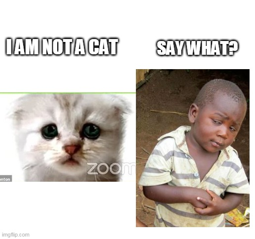 Blank White Template |  SAY WHAT? I AM NOT A CAT | image tagged in blank white template,memes,not a cat,lawyer,2021,zoom | made w/ Imgflip meme maker