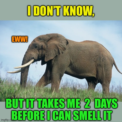 I DON'T KNOW, BUT IT TAKES ME  2  DAYS  BEFORE I CAN SMELL IT EWW! | made w/ Imgflip meme maker