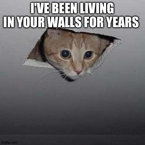 Ceiling Cat |  I'VE BEEN LIVING IN YOUR WALLS FOR YEARS | image tagged in memes,ceiling cat | made w/ Imgflip meme maker