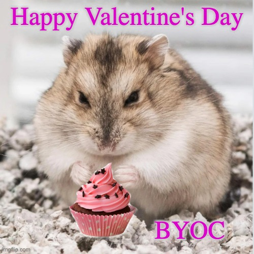 Hamster Valentine |  Happy Valentine's Day; BYOC | image tagged in you know what you did,hamster,valentine's day,cupcake,cute | made w/ Imgflip meme maker