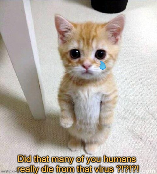 2021 is the new 2020 |  Did that many of you humans  really die from that virus ?!?!?! | image tagged in memes,cute cat,sad truth,coronavirus,so sad,stop | made w/ Imgflip meme maker