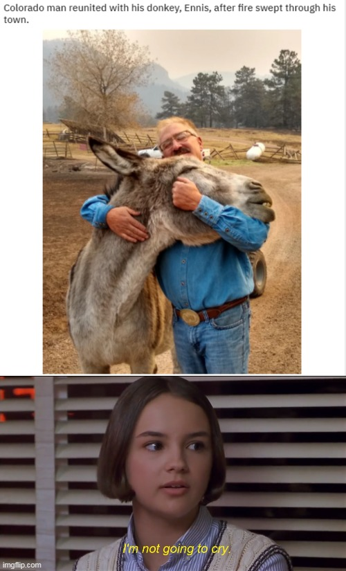 Man reunited with his donkey | image tagged in i'm not going to cry,memes,mary anne spier,news,donkey | made w/ Imgflip meme maker