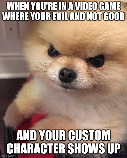 Angry Pomeranian |  WHEN YOU'RE IN A VIDEO GAME WHERE YOUR EVIL AND NOT GOOD; AND YOUR CUSTOM CHARACTER SHOWS UP | image tagged in angry pomeranian,video games | made w/ Imgflip meme maker