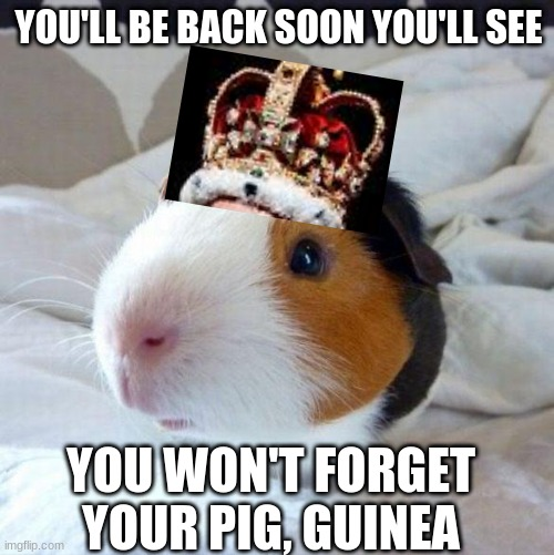 King Guinea The 3 |  YOU'LL BE BACK SOON YOU'LL SEE; YOU WON'T FORGET YOUR PIG, GUINEA | image tagged in guinea pig,hamilton | made w/ Imgflip meme maker