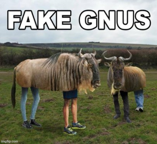 Gnus | image tagged in news,funny | made w/ Imgflip meme maker