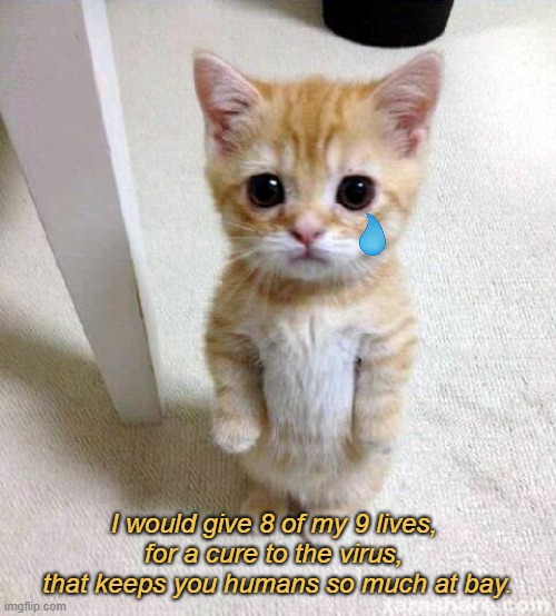 Vaccine yes or no - what we need is a magic potion |  I would give 8 of my 9 lives,  for a cure to the virus,  that keeps you humans so much at bay. | image tagged in memes,cute cat,coronavirus,sad,sad truth,2021 | made w/ Imgflip meme maker