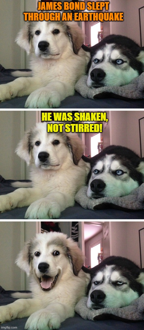 Bad pun dogs |  JAMES BOND SLEPT THROUGH AN EARTHQUAKE; HE WAS SHAKEN, NOT STIRRED! | image tagged in bad pun dogs,james bond,puns,jokes,earthquake,funny memes | made w/ Imgflip meme maker
