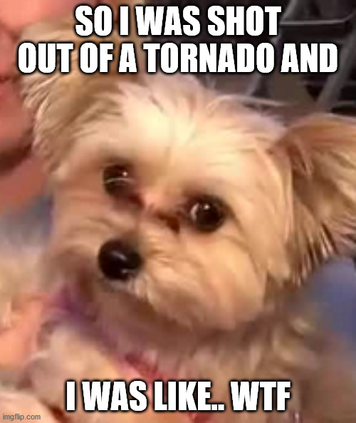 Penny the Tornado Dog |  SO I WAS SHOT OUT OF A TORNADO AND; I WAS LIKE.. WTF | image tagged in dog,tornado | made w/ Imgflip meme maker