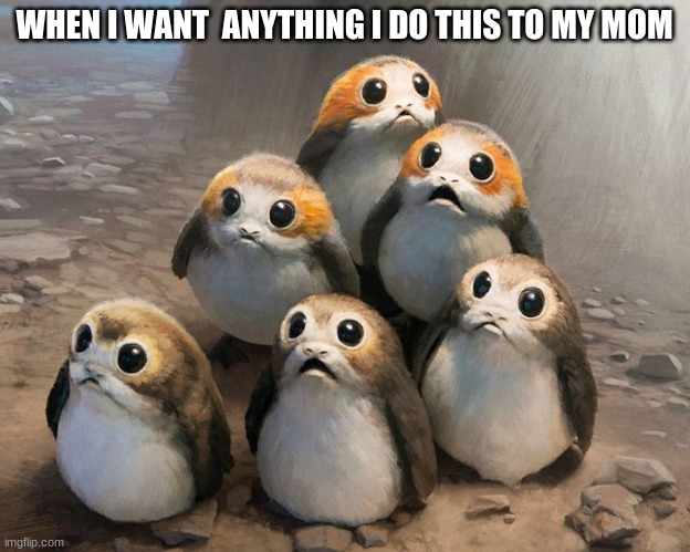 it tru do |  WHEN I WANT  ANYTHING I DO THIS TO MY MOM | image tagged in porg,star wars porg | made w/ Imgflip meme maker