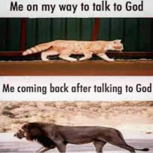 talk with the most high god. you will feel like a lion when your done | image tagged in jesus,lion,talk,god | made w/ Imgflip meme maker