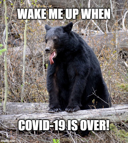 Wake Me Later |  WAKE ME UP WHEN; COVID-19 IS OVER! | image tagged in lol,funny animals,funny bear,funny memes,covid-19 | made w/ Imgflip meme maker