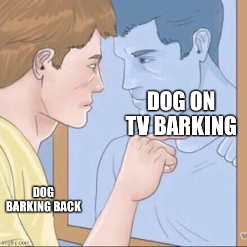 Pointing mirror guy |  DOG ON TV BARKING; DOG BARKING BACK | image tagged in pointing mirror guy | made w/ Imgflip meme maker