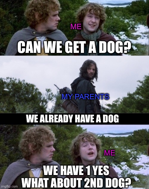 I luv doggos |  ME; CAN WE GET A DOG? MY PARENTS; WE ALREADY HAVE A DOG; ME; WE HAVE 1 YES WHAT ABOUT 2ND DOG? | image tagged in pippin second breakfast,lord of the rings,pippin,merry,aragorn,dog | made w/ Imgflip meme maker