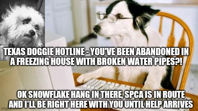 Snowflake Cruz |  TEXAS DOGGIE HOTLINE - YOU'VE BEEN ABANDONED IN A FREEZING HOUSE WITH BROKEN WATER PIPES?! OK SNOWFLAKE HANG IN THERE, SPCA IS IN ROUTE AND I'LL BE RIGHT HERE WITH YOU UNTIL HELP ARRIVES | image tagged in dog computer,snowflake,ted cruz,texas,texas freeze,dog | made w/ Imgflip meme maker