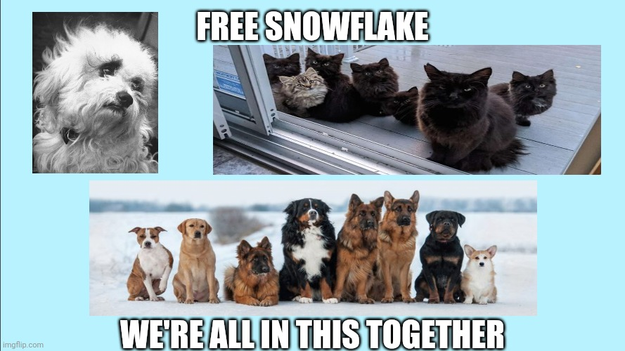 Free Snowflake |  FREE SNOWFLAKE; WE'RE ALL IN THIS TOGETHER | image tagged in blank background,snowflake,texas,ted cruz,texas freeze storm,free snowflake | made w/ Imgflip meme maker