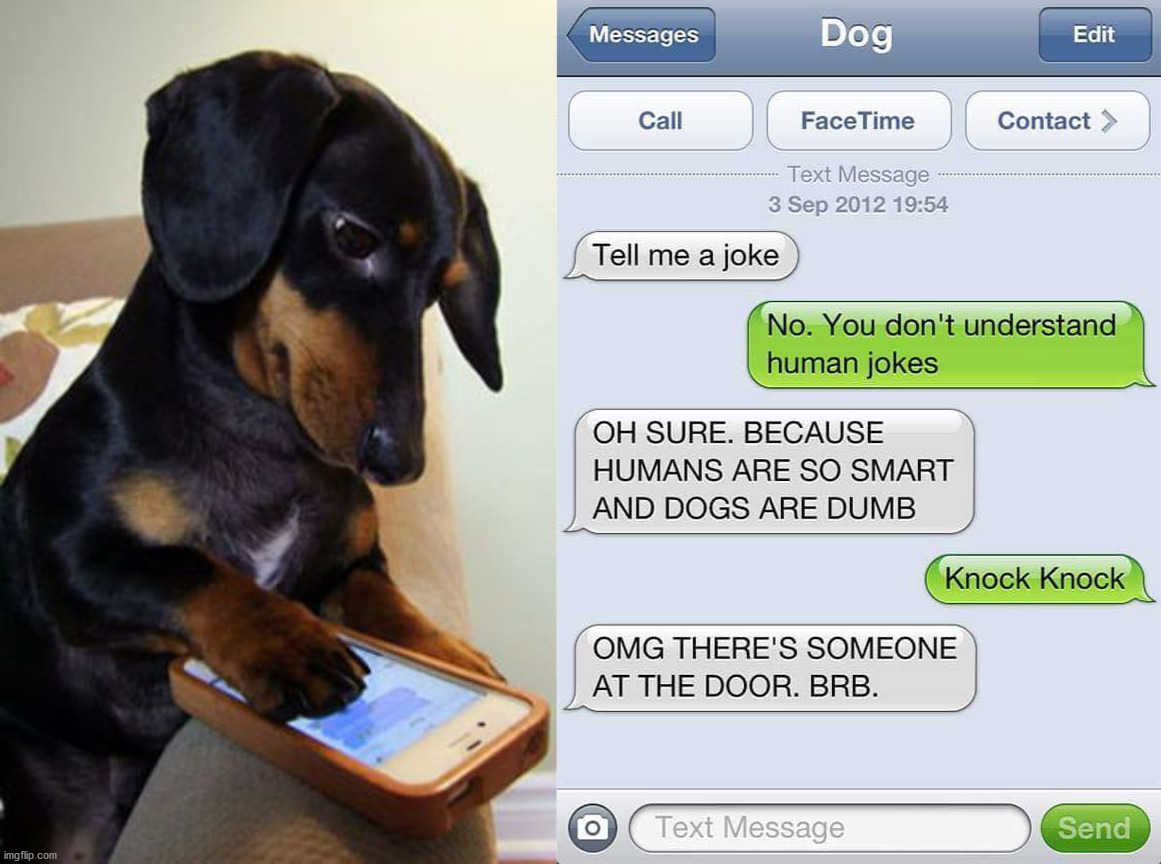 If dogs texted | image tagged in texting,dog,funny dog | made w/ Imgflip meme maker