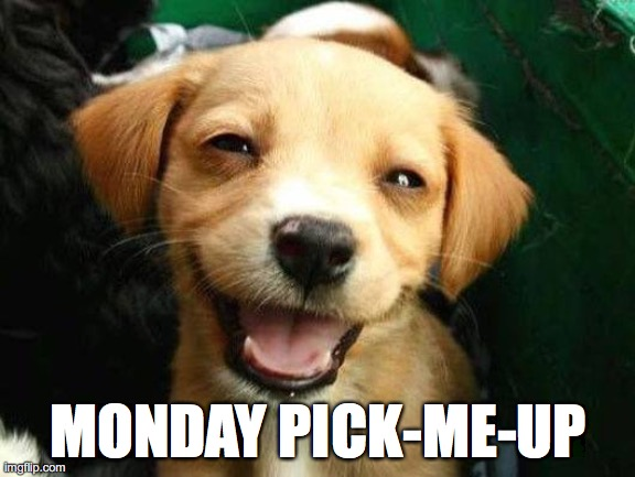 MONDAY PICK-ME-UP | image tagged in dog smiling | made w/ Imgflip meme maker