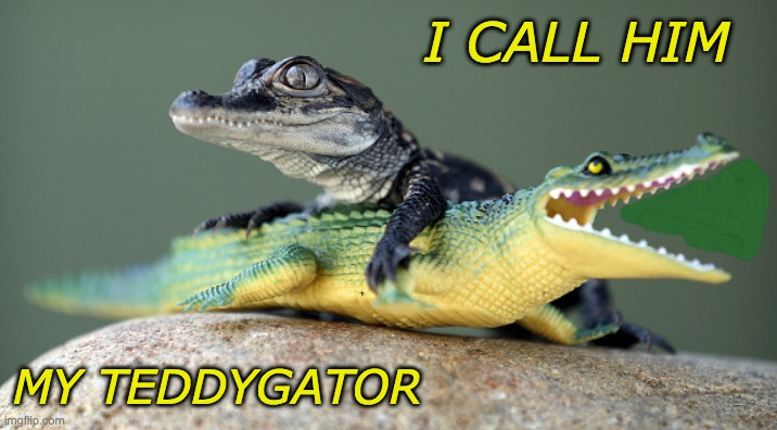 Loves his toy |  I CALL HIM; MY TEDDYGATOR | image tagged in aligator's toy | made w/ Imgflip meme maker