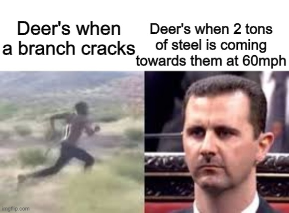 Deers |  Deer's when 2 tons of steel is coming towards them at 60mph; Deer's when a branch cracks | image tagged in relatable | made w/ Imgflip meme maker